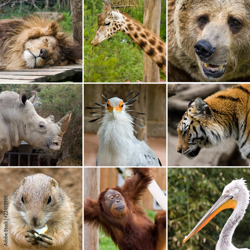 wild nature collage