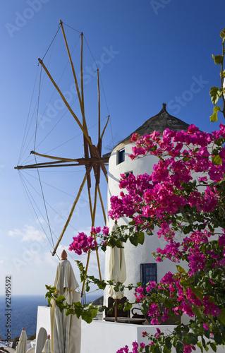 Windmühle mit Blumenpracht in Oia