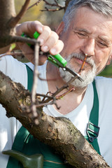 Portrait of a senior man gardening (cutting small branches) in h