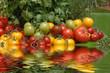 tomates variées