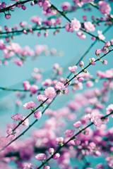 Tender pink sakura background