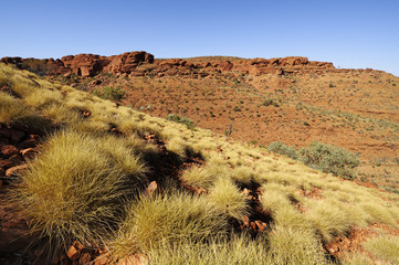Spinifex im Watarrka Nationalpark