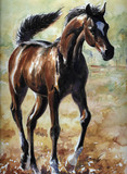Arabian foal watercolor painted.