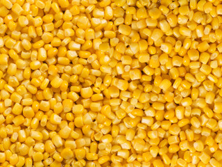 Appetizing background of yellow preserved corn XXL