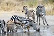 Zebra Watering Hole