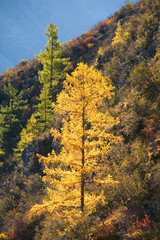 Green and yellow trees