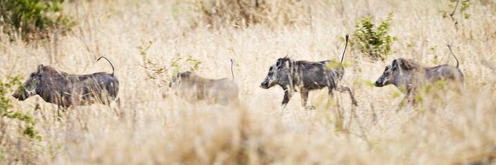 running warthog