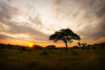 African Savannah Sunrise