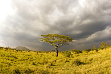 Beatiful Tree in Africa