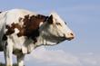 Inspiration bovine