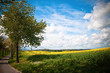 Canola Landscape