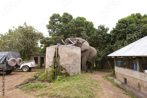 Elephant in Camp