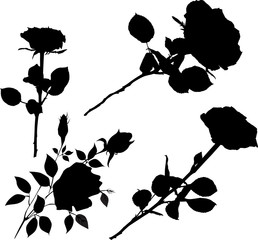 black rose flowers collection