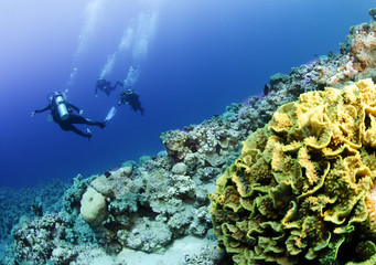 scuba divers on reef