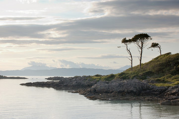 Trees by bay at Arisaig