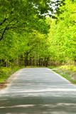 Empty road between trees poster