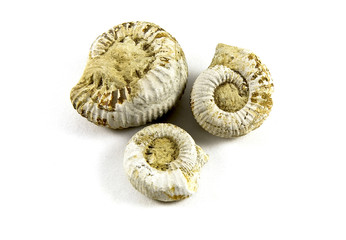 Ammonite Fossil isolated on a white background