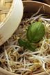 Germogli di soia nella vaporiera