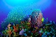 Quadro Coral Reef, Similan National Park, Thailand