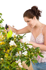 Gardening - woman sprinkling water on Rhododendron flower blosso