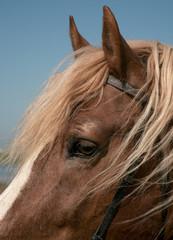 Portrait of a favourite horse
