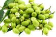 fruits de neem, plante médicinale indienne, fond blanc