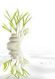 Zen Peace - 22588762