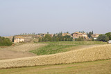 typical tuscan landscape poster