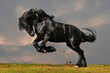 canvas print picture - black friesian stallion gallop in sunset