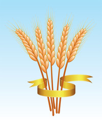 bunch of vector wheat ears and golden ribbon