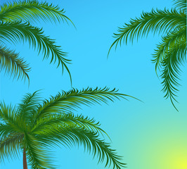 Branches of palm trees against the sky. Vector illustration