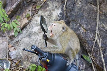 A monkey sitting on a motorcycle