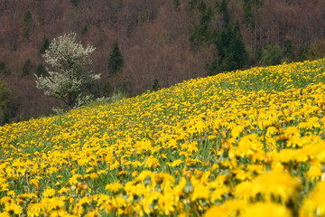 Yellow meadow