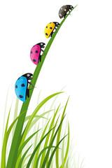 Coccinelles des couleurs de l'imprimerie dans l'herbe