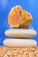 Sea shell on a sandy beach over sky