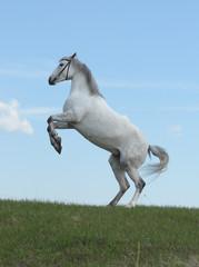 Grey horse rears