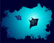 Background of a coral reef with manta ray