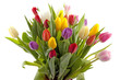 Colorul Dutch tulips in closeup over white background