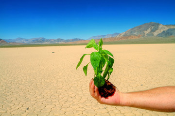 Invitaion to green environment