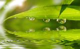 Fototapety Bambus im Sonnenlicht mit Wasserspiegelung und wassertropfen