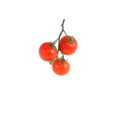 Isolated bunch of tomatoes