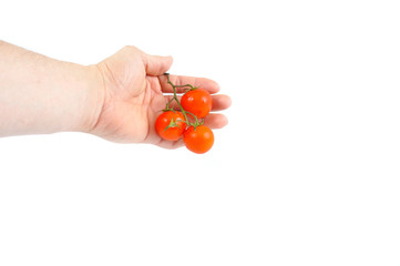 Isolated bunch of tomatoes in hand