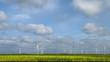 Windräder im Rapsfeld