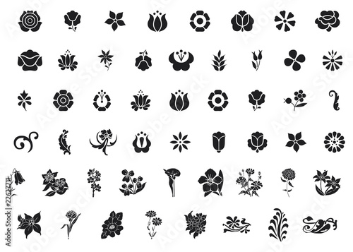 Diversi tipi di fiori e foglie immagini e vettoriali for Tipi di fiori