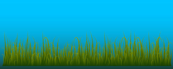 Grass isolated on blue background