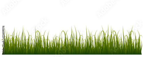 Grass isolated on white background - very detailed
