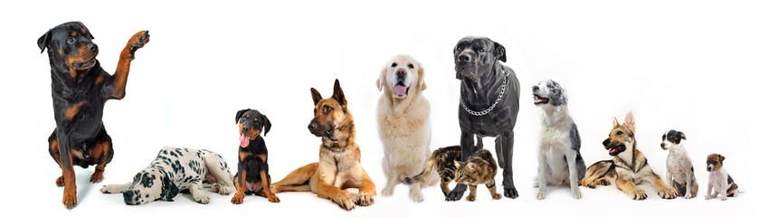 groupe de chiens et chat