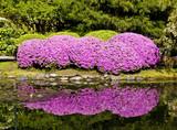 Fototapety Pink Rhododendron Bush