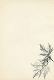 botanical engraving on vintage paper background
