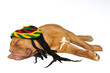 Rasta Dreams